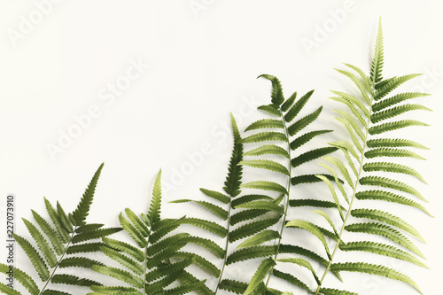 Fresh fern branch green leaves isolated on white background for creative layout made of leaf nature.