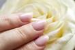 white rose in a woman's hand with a beautiful manicure