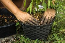 Soil Mixing With Organic Ferti...