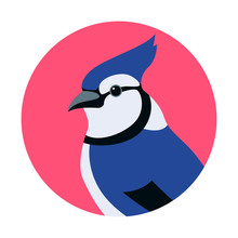 Blue Jay Head Vector Illustration Flat Style
