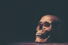 Human Skull, Halloween Concept