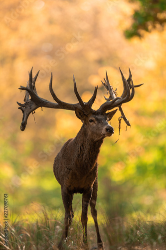 Deurstickers Hert Deer's Slab in the forest
