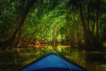 Dominica Rowing Boat Paddling Into The Mangrove With Trees And Beautiful Soft Sunlight In The Background, Dark River. Blurry Boat And Sharp Trees On The Indian River Of Dominica
