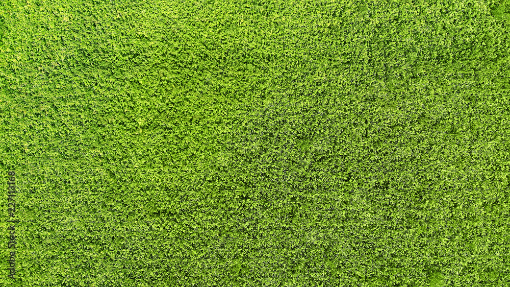Fototapety, obrazy: Green grass texture background. View above.
