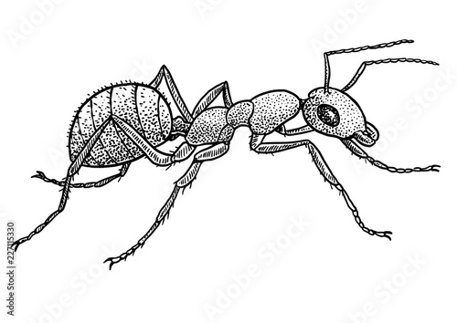 Photo Ant illustration, drawing, engraving, ink, line art, vector