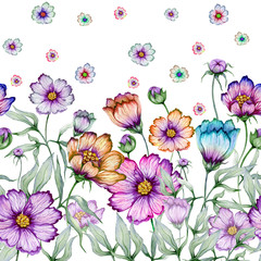 Fototapeta Do jadalni Beautiful cosmos flowers with green leaves on white background. Seamless floral pattern. Watercolor painting. Hand drawn and painted illustration