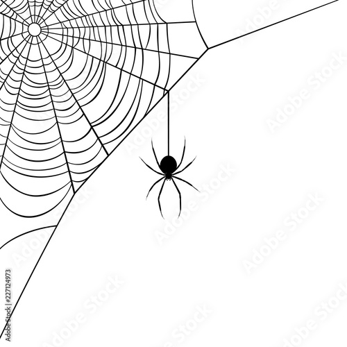 Fotografía Vector illustration of a corner web/spider design.