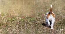 Dog Tail - Small Pet Puppy Wal...
