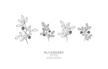 Hand Drawn Blueberry Set.