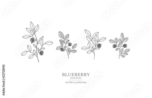Fotografija Hand drawn blueberry set.