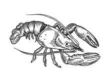 Lobster Sea Animal Engraving Vector Illustration. Scratch Board Style Imitation. Black And White Hand Drawn Image.