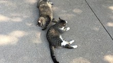 Cute Cats Laying On Driveway