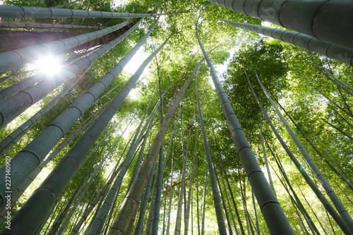 In de dag Bamboo Bamboo forest, Arashiyama, Kyoto, Japan. Morning sunlight.