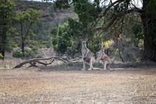 South Australia – Outback Wi...