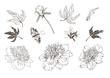 Set of vector hand drawn illustrations of peony.