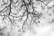 Black And White Beautiful Branches