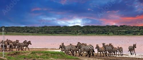 zebry-w-serengeti-national