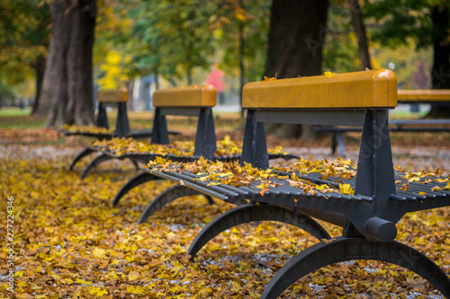 Wall Murals Cemetery Park benches in the fall