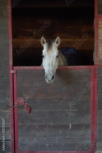 Fotografie, Obraz  Horse