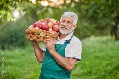 Fototapeta Bearded farmer holding basket with apples on shoulder. obraz