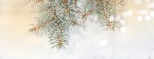 Frozen Branches Of Fir Tree. H...