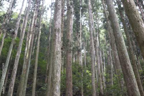 Photo Stands Road in forest forest trees nature wood. Woodland forest