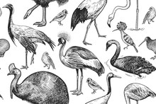 Birds Cranes, Cassowary, Flamingo, Swan, Hoopoe, Kiwi. Seamless Pattern