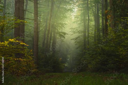 Fototapeten Wald Magic autumn forest, romantic, misty, foggy landscape
