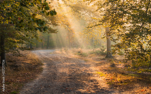 Route dans la forêt Early morning sunlight In an European Forest with a path and fog