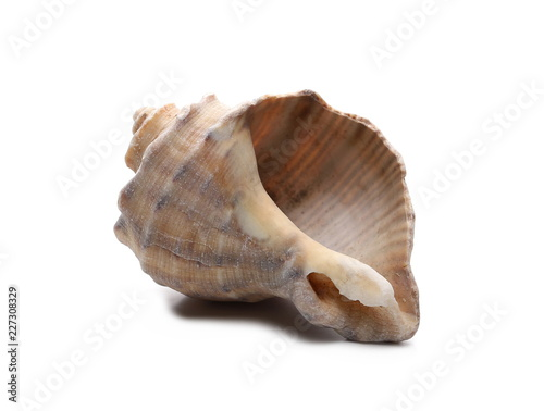 Decorative sea shell isolated on white background