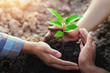 Leinwanddruck Bild - farmer three hand protection tree planting on soil with sunshine in garden