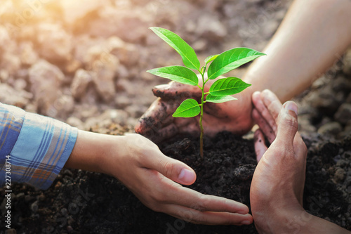 Poster Plant farmer three hand protection tree planting on soil with sunshine in garden
