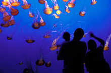 Family And Jellyfish - Montere...