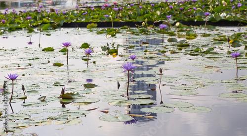 Fototapety, obrazy: Marina Bay Singapore