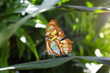 Beautiful Butterfly Sitting O...