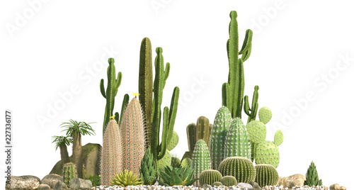 Foto  Decorative composition composed of groups of different species of cacti, aloe and succulent plants isolated on white background