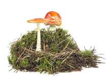Fly Agaric Mushrooms With Gree...