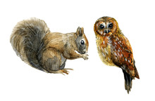 Squirrel And Owl Watercolor Il...