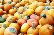 Diverse assortment of pumpkins outdoor. Autumn harvest