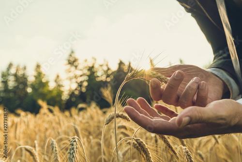 Fotografie, Obraz  Businessman carefully holding ripening golden wheat ear