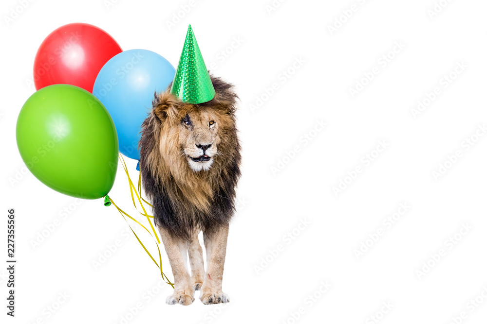 Fototapeta Lion Birthday Party With Copy Space