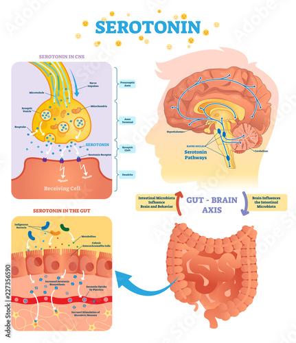 Photo Serotonin vector illustration