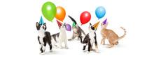 Playful Kitten Birthday Party Web Banner Copy