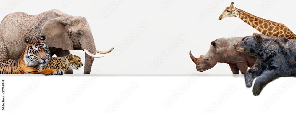 Fototapeta Zoo Animals Hanging Over Web Banner