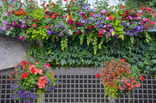 Beautiful Summer Hanging Baskets Filled With Color