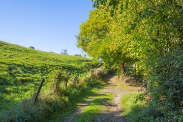 Fototapeta na wymiar Rural landscape in autumn colors in sunlight at fall