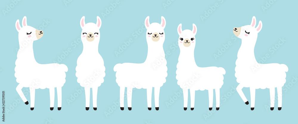 Fototapeta Vector illustration set of cute white llama in different postures.