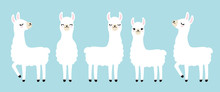 Vector Illustration Set Of Cute White Llama In Different Postures.