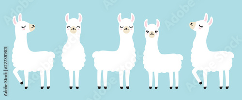 Vector illustration set of cute white llama in different postures Wallpaper Mural