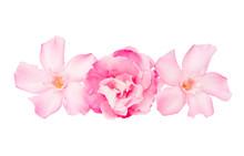 Oleander Flowers Isolated